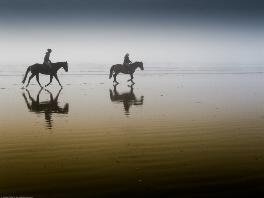 Pferde in Wittenbeck